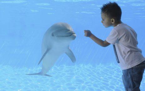 bambino che gioca con un delfino