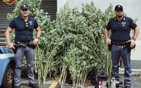 fidene-foto-campo-marijuana